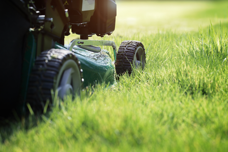Here's How Short To Cut Your Grass In The Spring | LawnGuru | Push To Cut  Blog