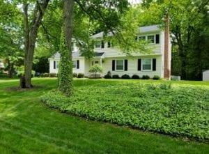 Freshly cut lawn in Philadelphia