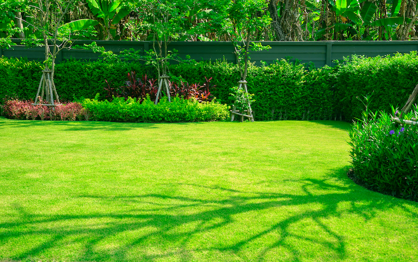 The best grass types to plant near me lawnguru push to cut blog - Grass lawn types make the right choice ...