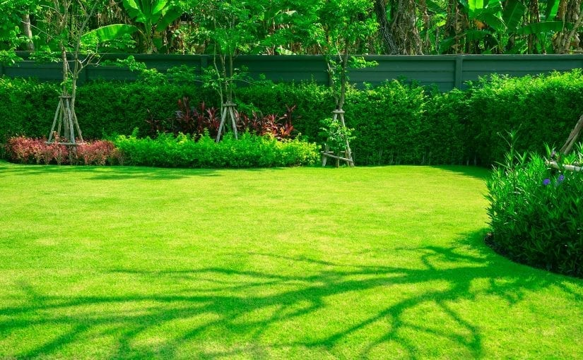 The Best Grass Types to Plant Near Me