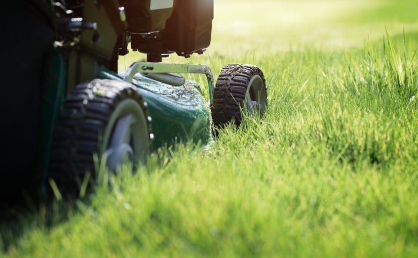 Here's How Short To Cut Your Grass In The Spring