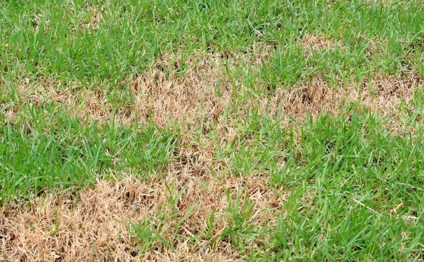 How To Diagnose Lawn Diseases