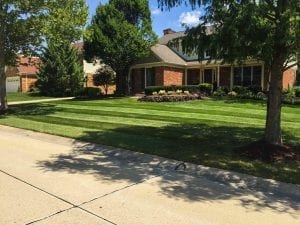 recently cut lawn in Bloomfield