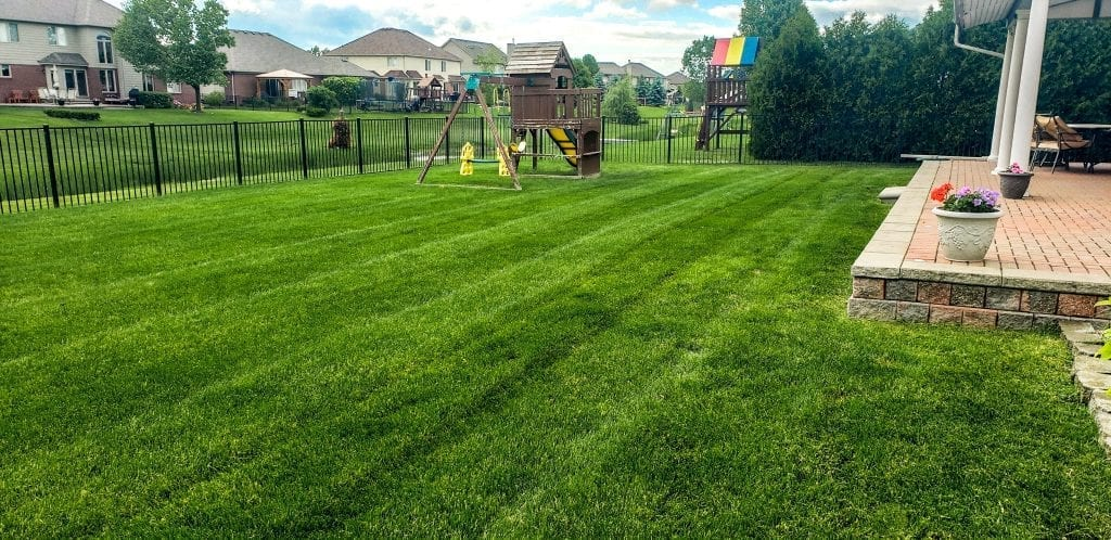 Best lawn service in Sterling Heights