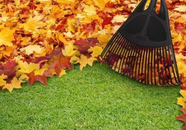 Fall clean-up cover photo